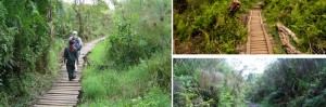 bigodi-wetland-tour-kibale