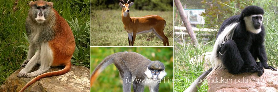 wildlife-safaris-uganda